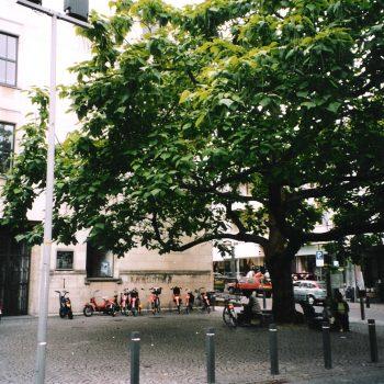 h6r1-v07 Geleenstraat-Trompetboom bij de achterkant van het gemeentehuis