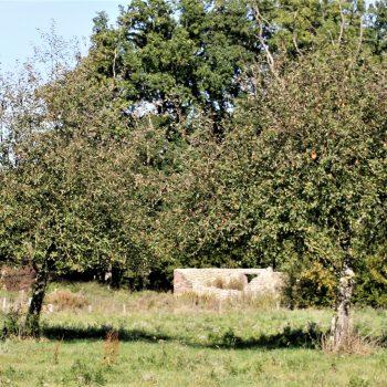 R6a9- Douvenraderallee-Restant Onderste Douvenrade